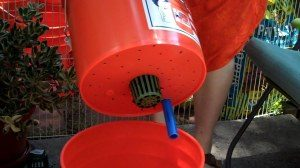 Follow our instructions to build your own self-watering bucket container.