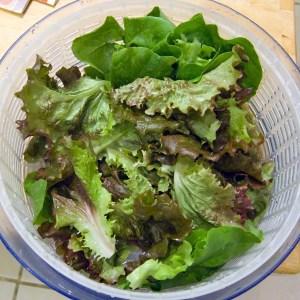 saladspinnergreens